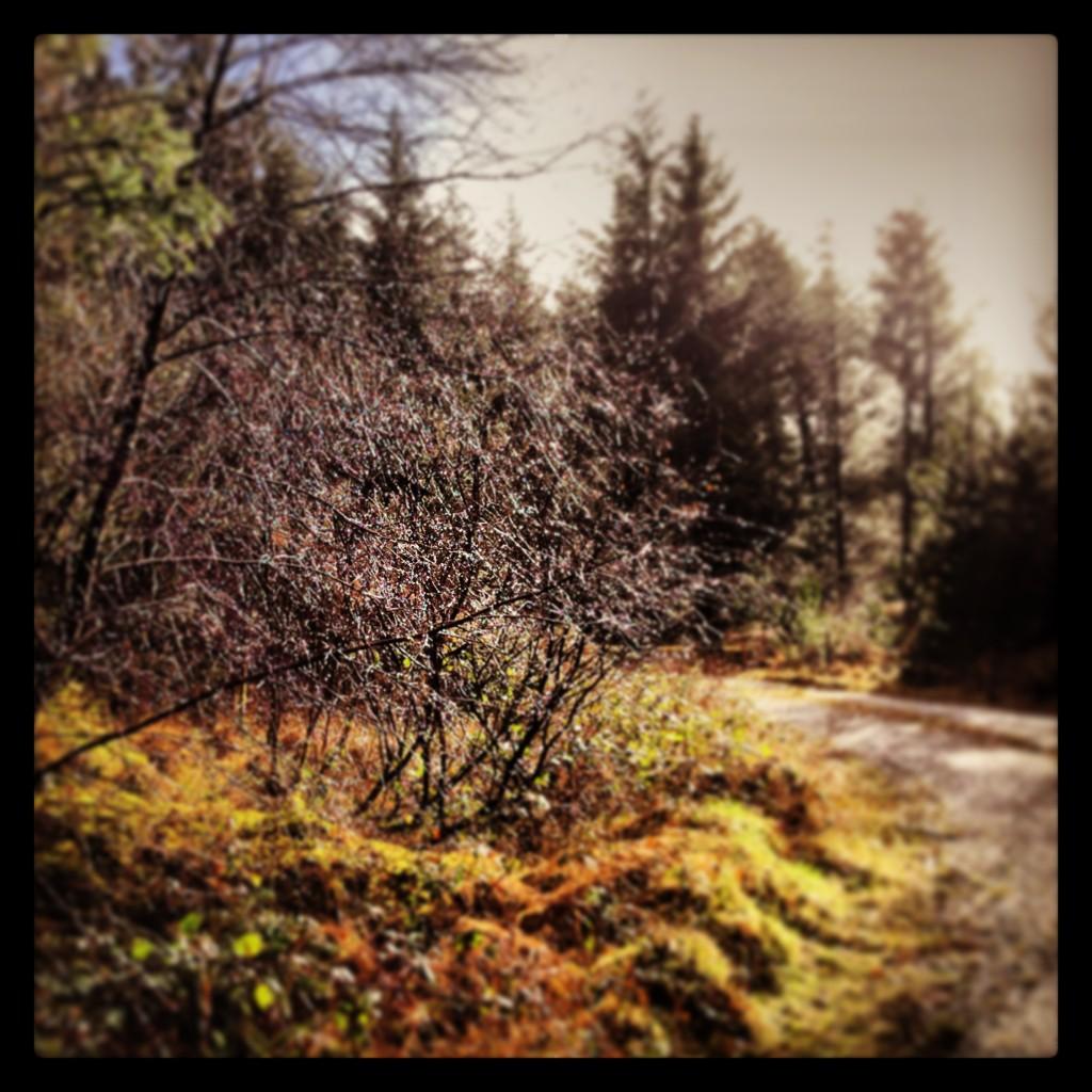 Glistening bush